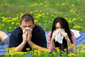 Seasonal Allergies - Hayfever
